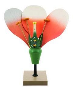 Flower Model [0792]