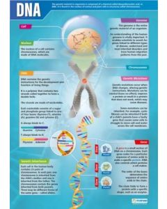 DNA Poster A1 Laminated [3089]