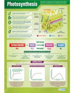 Photosynthesis Poster A1 Laminated [3131]