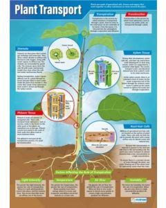 Plant Transport Poster A1 Laminated [3129]